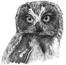Big Owl 1