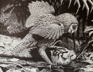 Big Owl 2